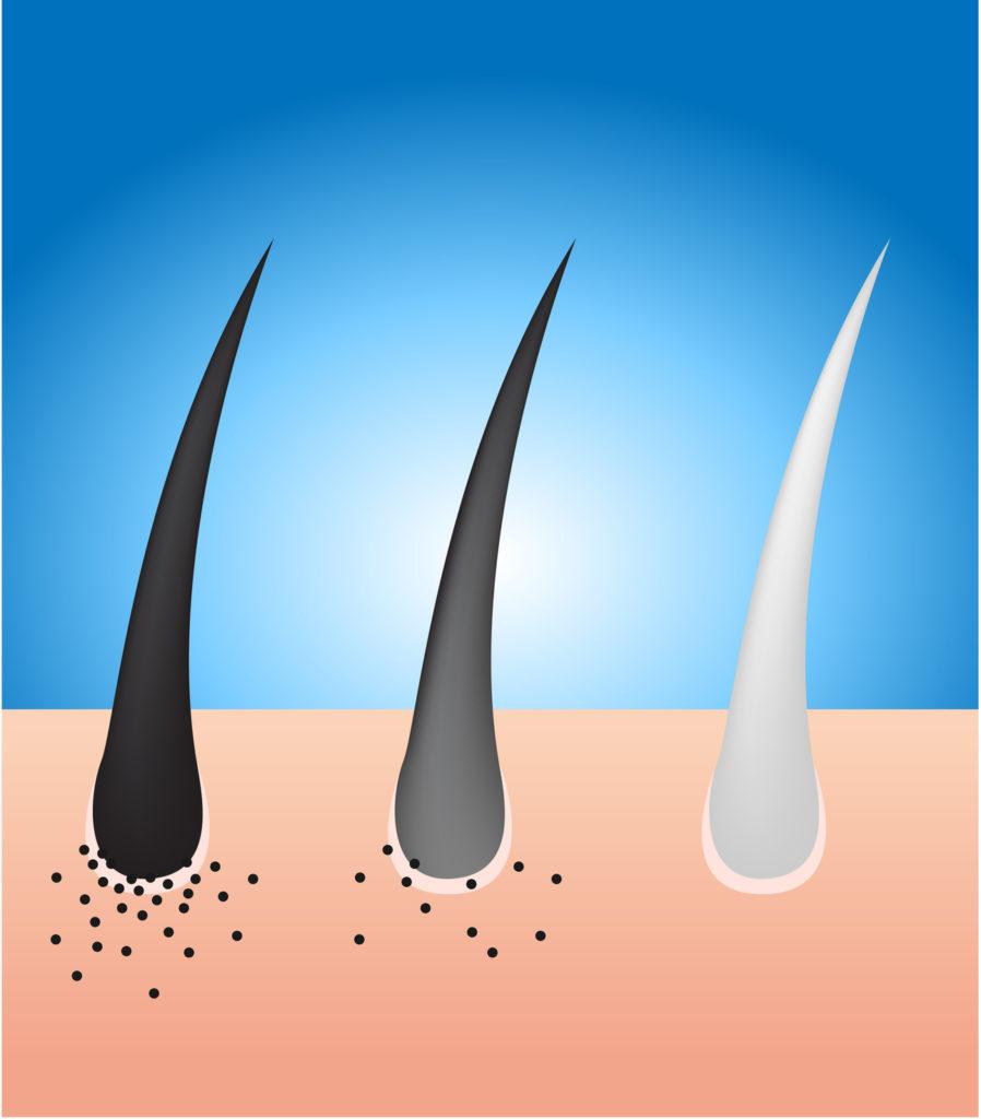 black-hair-turn-to-grey-hair-vector