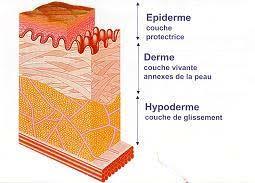 structure-de-la-peau-8500849